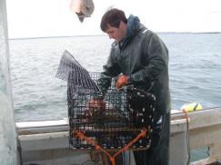 A crew member emptying a recruitment trap