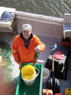 Crew member sampling cod during the sentinel survey