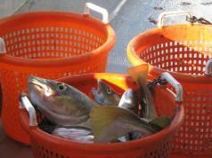 Fish on the sentinel survey