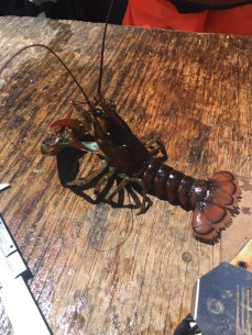 Lobster posing for the camera